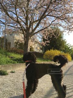 犬 - No.423392