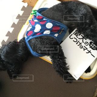 面白い寝方の愛犬の写真・画像素材[1185741]