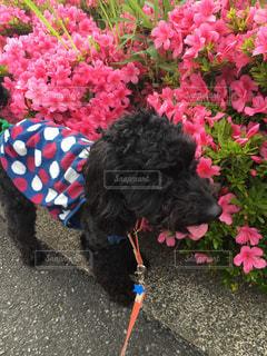 ピンクの花を持つ犬の写真・画像素材[1190821]