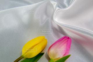 花,屋内,植物,綺麗,フラワー,チューリップ,鮮やか,美しい,布,背景素材
