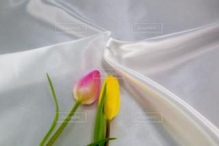 花,屋内,ピンク,植物,綺麗,フラワー,黄色,チューリップ,鮮やか,背景,美しい,布,素材