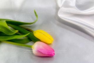 花,ピンク,植物,綺麗,フラワー,黄色,チューリップ,鮮やか,美しい,布,ゴージャス,背景素材