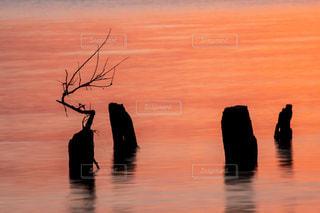 自然,風景,冬,湖,綺麗,水面,景色,鮮やか,夜明け,美しい,朝,グラデーション,琵琶湖,湖面,景観,明け方,ウインター,日出前