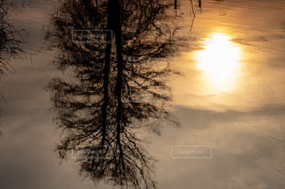 自然,風景,冬,夕日,屋外,太陽,雲,きれい,綺麗,夕焼け,夕暮れ,水面,景色,鮮やか,美しい,樹木,水鏡,夕陽,景観,草木,キレイ