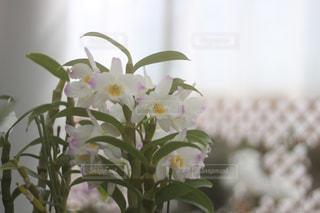 花,屋内,壁,蘭,草木,ユリ,フローラ