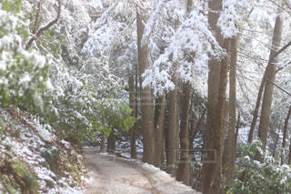 雪解けの登山道の写真・画像素材[3026021]