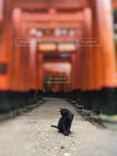 猫,京都,黒,観光地,鳥居,幸せ,伏見稲荷大社,黒猫,クロネコ,不思議,招き猫,神々しい,朱,使者
