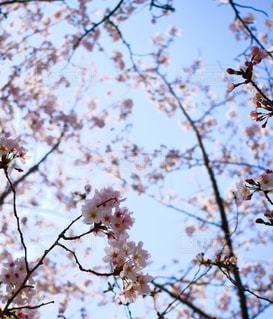 お花見にて@武庫川の写真・画像素材[3061602]