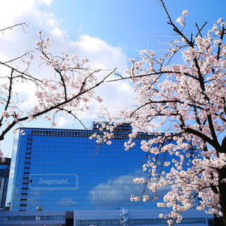 青空と桜の写真・画像素材[3077610]