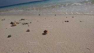 自然,屋外,砂,ビーチ,波,水面,海岸,ヤドカリ