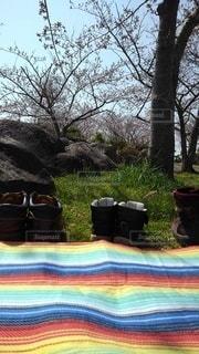 家族,桜,ファミリー,靴,屋外,親子,花見,樹木,スニーカー