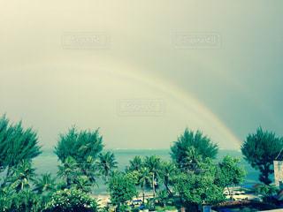 海,空,木,海外,虹,サイパン,リゾート