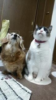 犬,猫,動物,屋内,かわいい