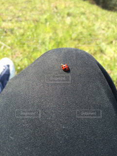 草,膝,てんとう虫