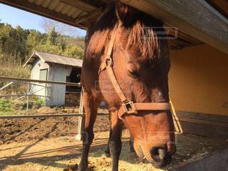 動物,屋外,茶色,馬,立つ,顔,アップ,地面,頭