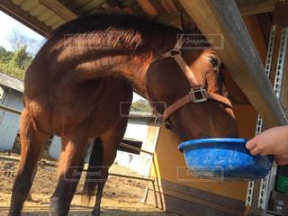 動物,馬,餌,餌やり,茶