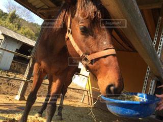 動物,屋外,茶色,牧場,馬,顔,アップ,競走馬,ファームの建物