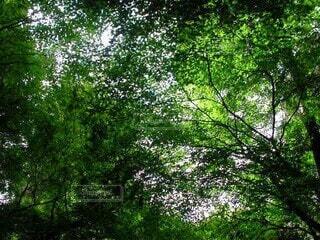 生い茂った綺麗な緑の森林の写真・画像素材[4407681]
