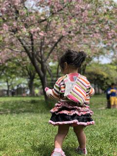 風景,公園,春,屋外,女の子,幼児
