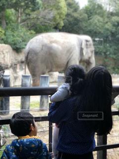 子ども,3人,動物,屋外,象,動物園