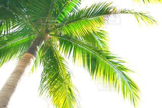緑,沖縄,樹木,旅行,ヤシの木,草木