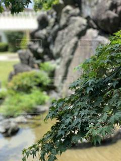 風景,庭,屋外,綺麗,景色,樹木,岩,石,和,遠近法,草木,ガーデン