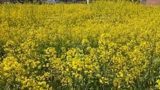 花,屋外,黄色,景色,草木