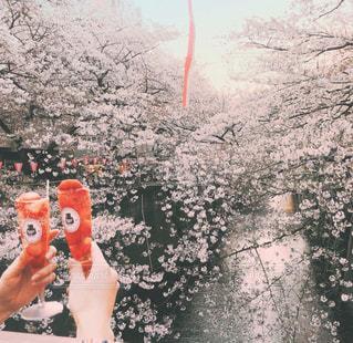 恋人,自然,花,桜,屋外,ピンク,花見,人,目黒川,デート,さくら,インスタ映え,苺のシャンパン,お花見デート