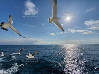 海,空,動物,鳥,雲,船,水面,景色,カモメ,日中