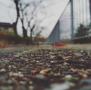 空,秋,落ち葉,樹木,石,アスファルト,目線,低い