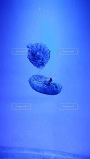 動物,魚,屋内,自由,青,水族館,2匹,浮遊,水中,神秘的,クラ ゲ,腔腸動物