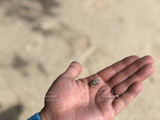 海,砂浜,手,結婚指輪,ヤドカリ,旦那さん