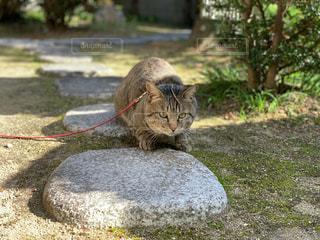 猫,動物,にゃんこ,庭,ねこ,地面,石