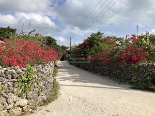 空,花,沖縄,沖縄旅行,ガーデン