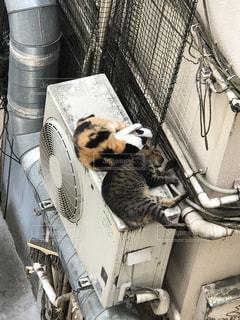 一緒に寝ているネコの写真・画像素材[3032658]