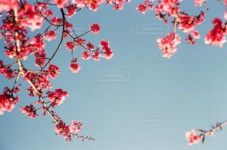空と桜の写真・画像素材[3032683]