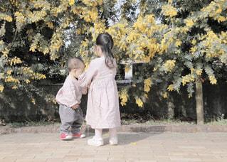 女性,男性,子ども,家族,友だち,2人,風景,花,屋外,少女,樹木,人,赤ちゃん,歩道,幼児,ミモザ,草木,履物