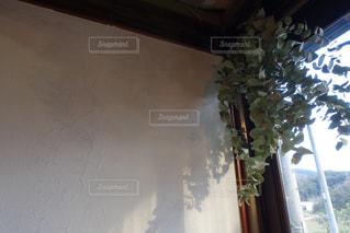 カフェ,屋内,窓,葉,日差し,窓辺,癒し,観葉植物,cafe,グリーン,午後,穏やか,おだやか