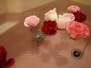 花,屋内,バラ,お風呂,草木