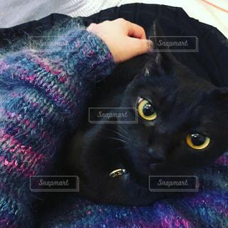 女性,猫,動物,カラフル,黒,鮮やか,寝転ぶ,黒猫,カラー,ニット,モヘア