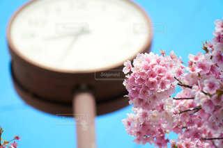 自然,空,花,春,桜,ピンク,青空,時計,景色,鮮やか,時間,さくら