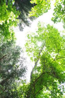 風景,空,森林,屋外,樹木
