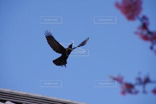 空を飛んでいる鳥の写真・画像素材[3031065]