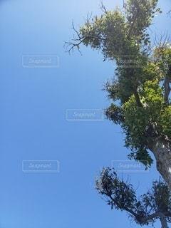自然,空,公園,屋外,緑,晴天,青,樹木,草木