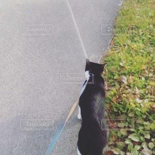 家族,猫,公園,動物,お散歩