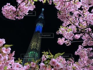 風景,花,春,桜,夜,夜景,スカイツリー,景色,鮮やか,草木