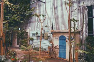 建物,植物,レトロ,家,樹木