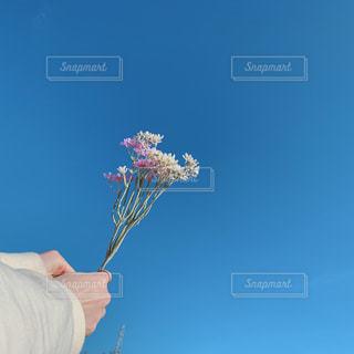友だち,自然,空,公園,花,春,ランチ,屋外,太陽,散歩,青い空,ピクニック,造花