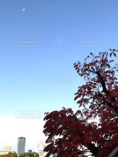 自然,空,秋,屋外,葉,樹木,月,草木