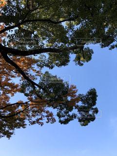 空,秋,屋外,樹木,草木,日中